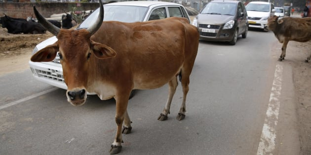 File photo of motorists driving past stray cows on a road in Allahabad, India, Friday, Jan. 31, 2014.