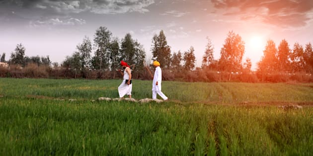 Farmer walking in the middle of green wheat field during early morning.