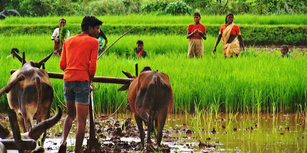 problems of farmers in india India is a land of villages the life of an indian farmer it is a good sign that the government is giving its utmost attention to the problem.