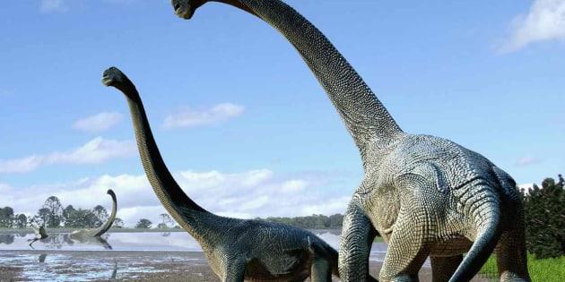 Un nouveau dinosaure découvert.