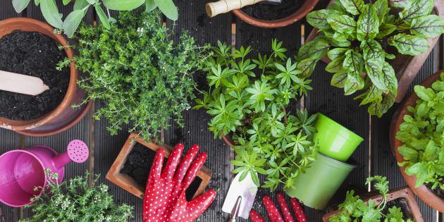 Horta doméstica: Como cultivar os próprios temperos em casa