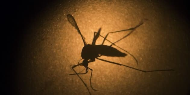 Heavy rain and flooding have created the perfect breeding ground for a plague of mozzies.