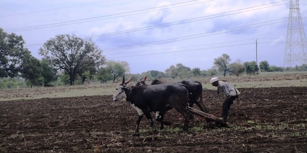 Marathwada farmers are fighting against all odds in the current kharif season.