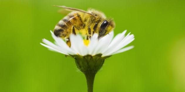 pour sauver les abeilles oslo cr e la premi re autoroute pour les butineuses le huffington post. Black Bedroom Furniture Sets. Home Design Ideas