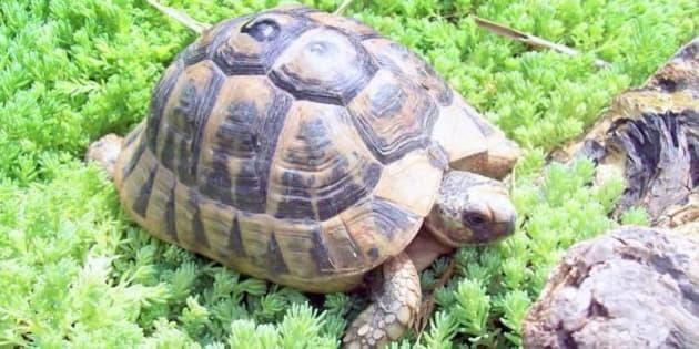 Salva le tartarughe e crea un 39 oasi per tutelarle sono for Tutto per le tartarughe