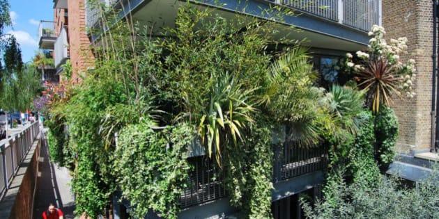 Ocho plantas para que tu terraza parezca una jungla for Plantas resistentes al sol para terrazas