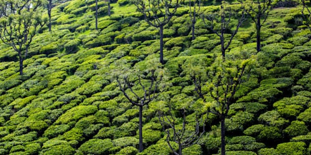 India Can Beat Climate Change With Trees On Farms: World ...