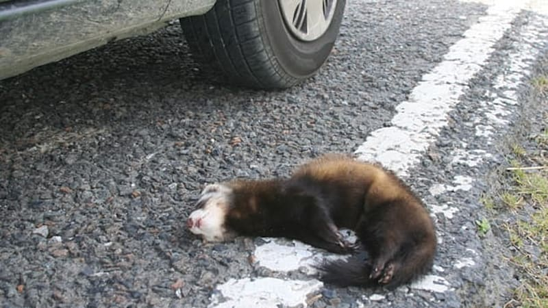 MI bill aims to turn roadkill into roadside cuisine