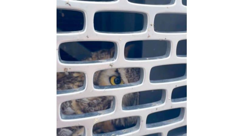 Owl-2.jpg
