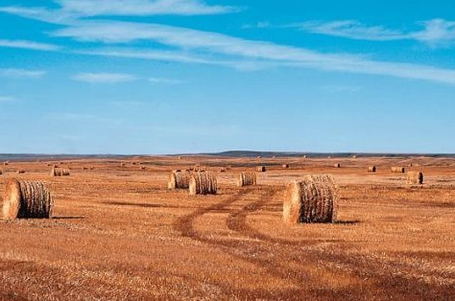 10 cose da sapere sul kamut, il grano antico bio che fa bene all'intestino (FOTO)