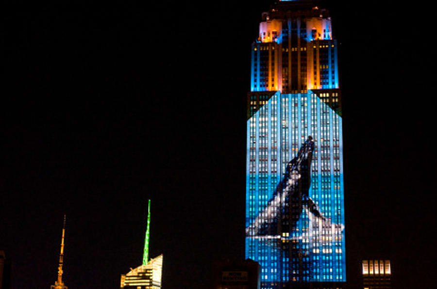 "Large images of endangered species are projected on the south facade of The Empire State Building, Saturday, Aug. 1, 2015 in New York. The large scale projections are in part inspired by and produced by the filmmakers of an upcoming documentary called ""Racing Extinction.""  (AP Photo/Craig Ruttle)"