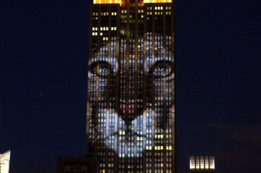 L'Empire State Building si illumina per Cecil. Sabato sera la proiezione delle specie a rischio estinzione (FOTO)