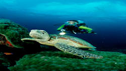 This Sea Turtle Population Is Almost All Female, Thanks To Climate