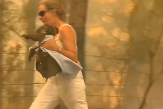 Woman risks her life to rescue scorched koala from Australian bushfire