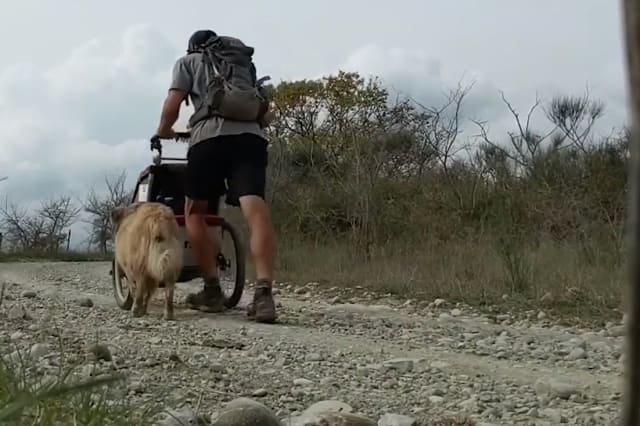 One man's epic bid to walk across the entire world with his dog for company