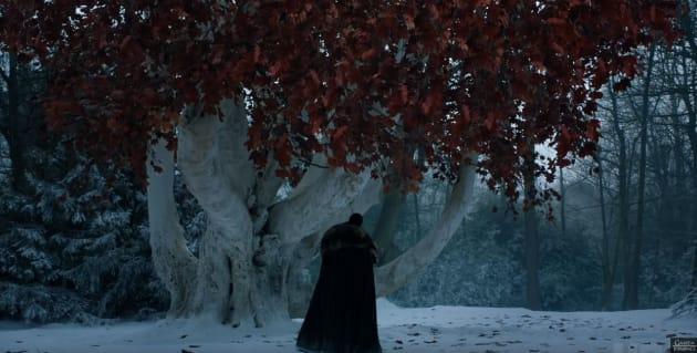 Jon Snow au pied du Barral, ces arbres aux feuilles rouges très répandus au Nord de
