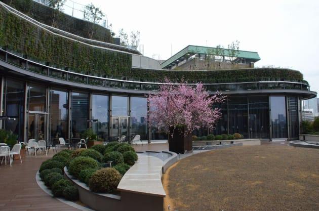 6F「パークビューガーデン」。日比谷公園が一望できる