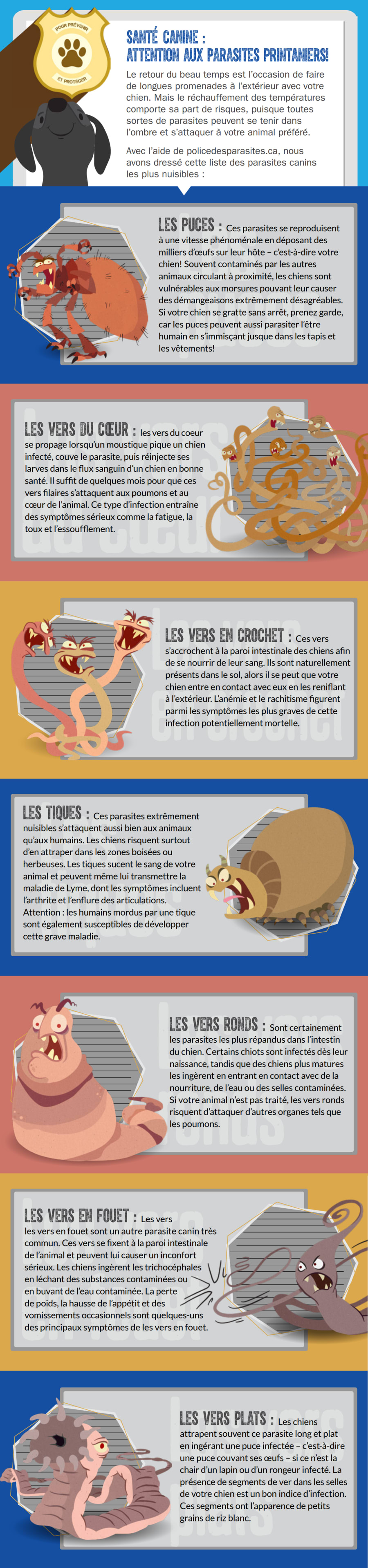 Santé canine: attention aux parasites