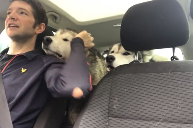Dogs can't contain happiness after doggy daycare