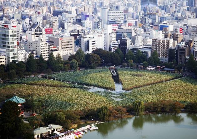 不忍池環境アートプロジェクト『不忍・緑・五景』(2012年)