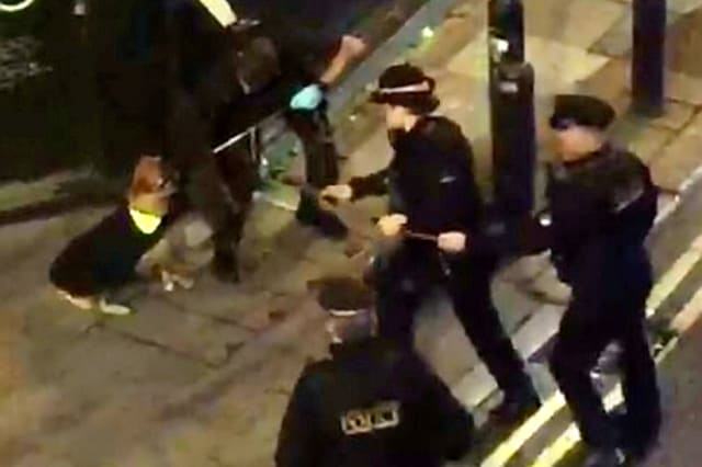 Moment plucky homeless dog escapes after dodging half a dozen police cars and TASER
