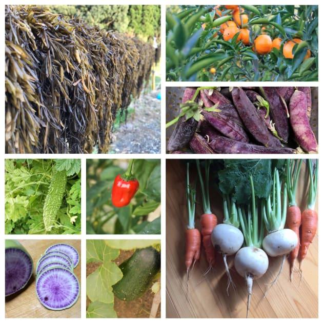 筒井さんが作るベーグルやマフィンには、天草でとれた食材がふんだんに使われている