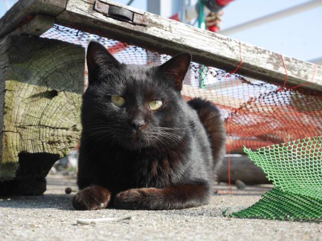 屋外で一眼レフを使うと、黒猫の表情もばっちり