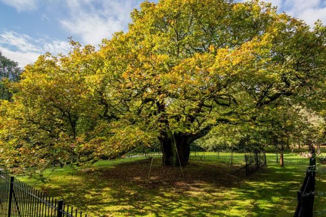 England's Tree of the Year announced