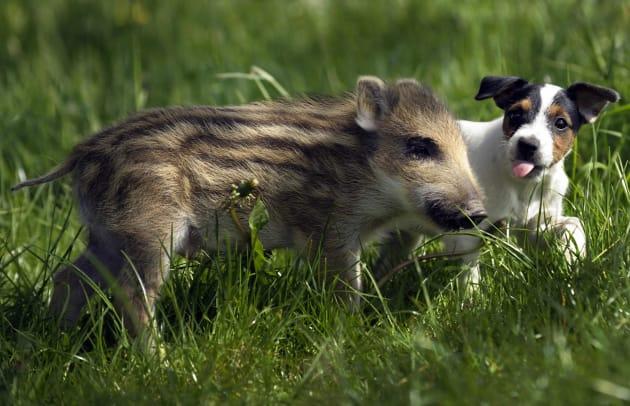 ウリ坊のマンニと子犬のキャンディー