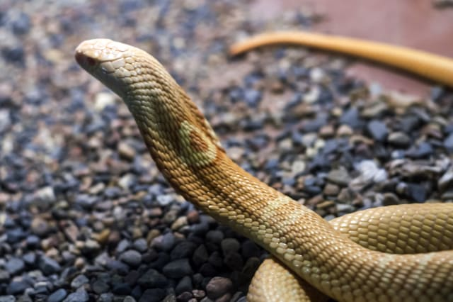 Exotic snake in the terrarium