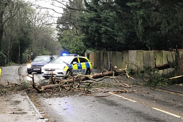 Driver killed by falling tree as Storm Ciara winds battered UK