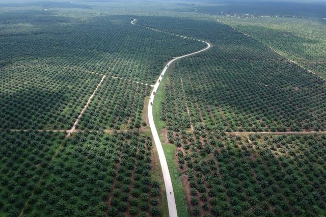 FILE PHOTO - An aerial photo of a palm oil plantation in Batanghari
