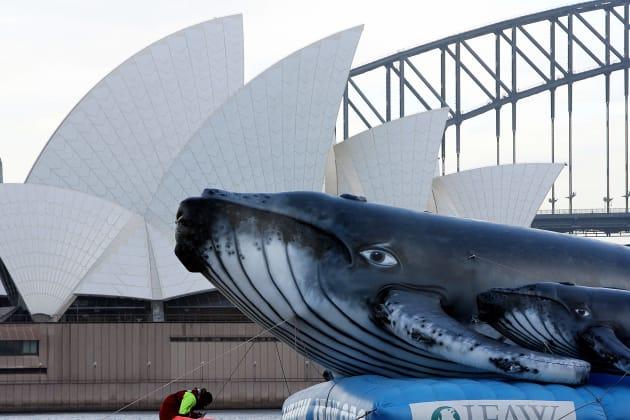 オーストラリア・シドニー湾で行われたクジラ保護団体の反捕鯨の海上デモ(2006年撮影)