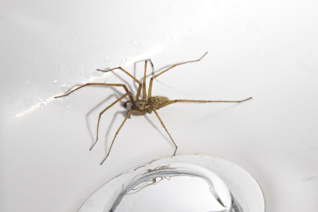 Spider trapped in sink, UK