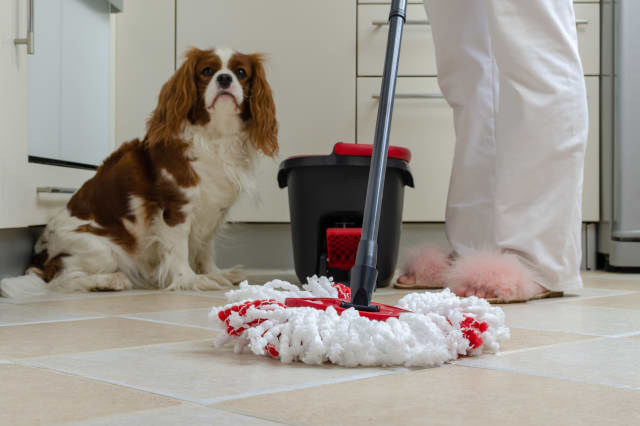Mop and dog in kitchen