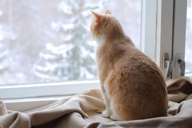 C'est la journée internationale du chat, voici pourquoi il rend plus heureux et en meilleure