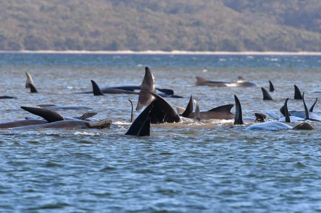 Australia Whales