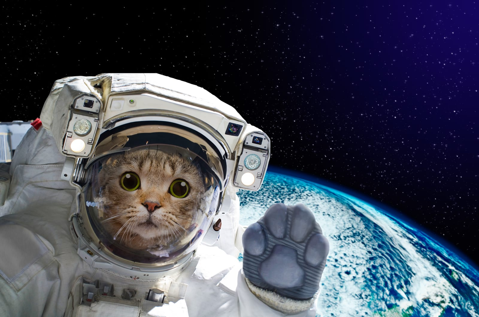 Hitting the Books: How to sling a cat through interstellar space