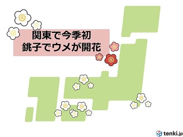 きょう16日、銚子でウメが咲きました。関東の気象台でウメの開花が確認されるのは、今シーズン初めてのことです。