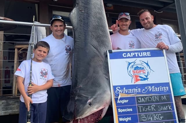Eight-year-old boy reels in monster shark
