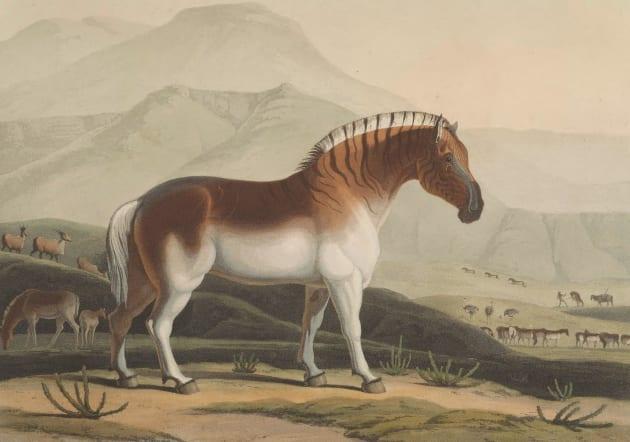 サミュエル・ダニエル「アフリカの風景と動物」(1804~1805年)より