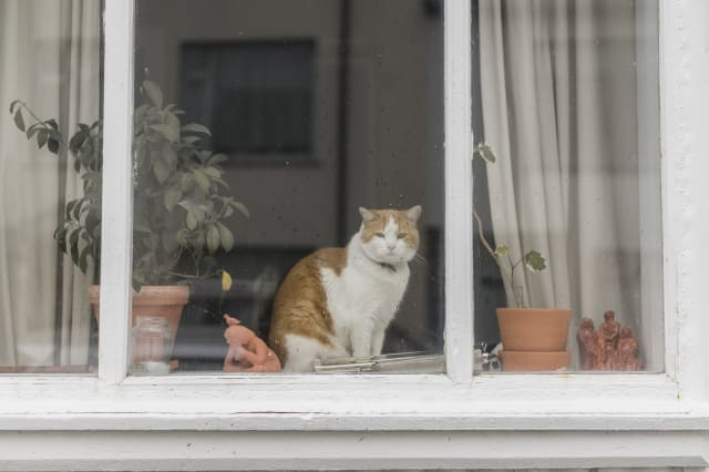 Cat sitting behind window of a residential house