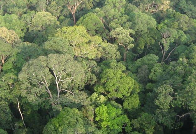 ボルネオ島の熱帯雨林