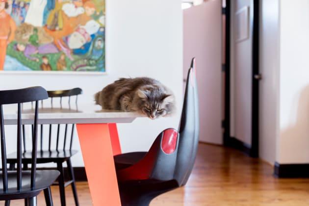広いアパートメントの中で、なぜかテーブルの、それも一番端っこに寝転ぶ、変てこな猫。首は苦しくないんでしょうか......