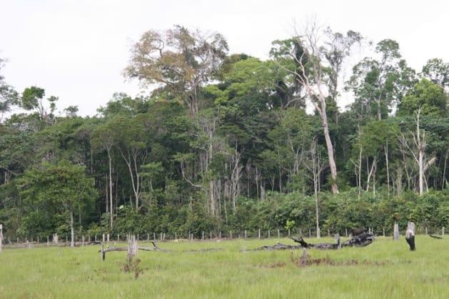 アマゾン熱帯林で実験的に作られた林縁.林縁には背の低い樹木がびっしりと葉を茂らせている