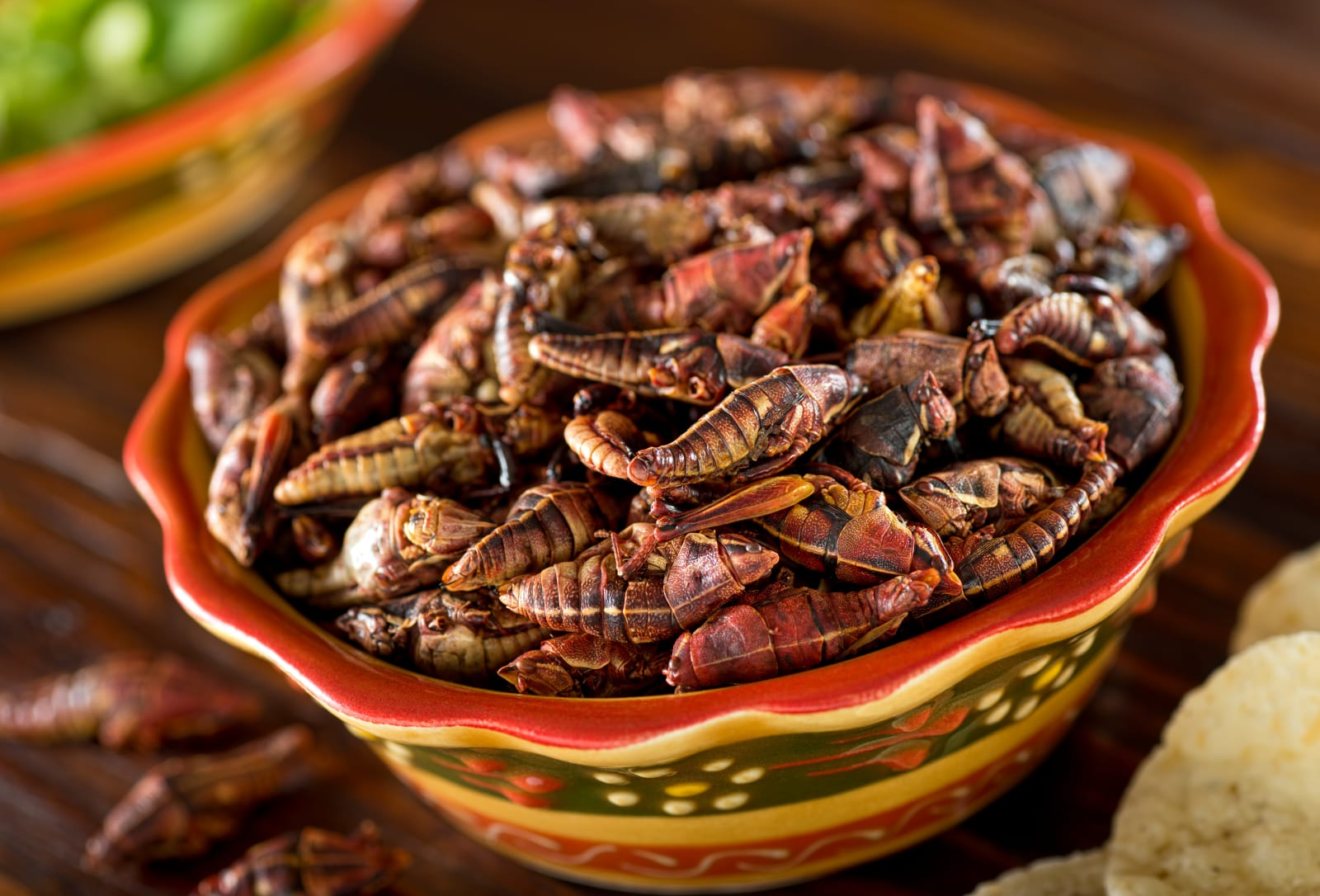 Chapulines Fried Mexican Grasshoppers