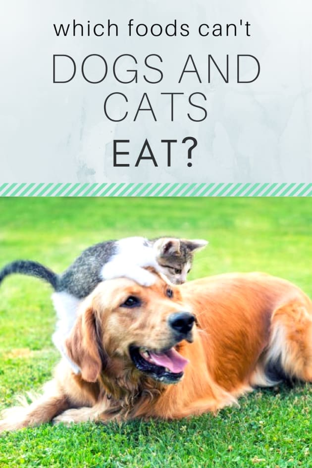 Foods That Are Toxic To Cats And Dogs