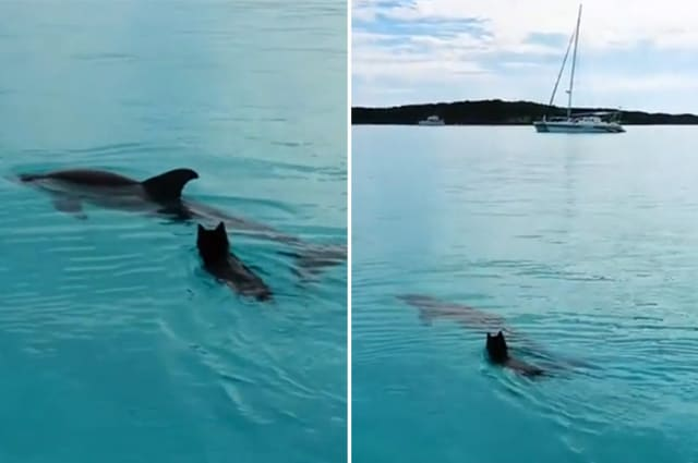 Incredible footage of dog and dolphin playing together