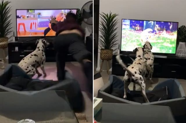 Australian man's epic save of falling TV after dogs launch attack