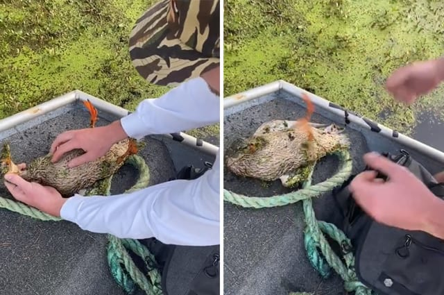 Man pumps strangled and unconscious duck's chest to bring it back to life